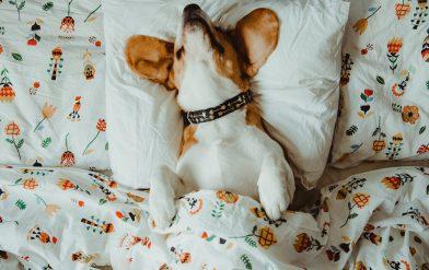 Why do dogs sleep upside down?